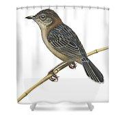 Stout Cisticola Shower Curtain