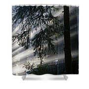 Stout Grove Redwoods With Sunrays Breaking Through Fog Shower Curtain