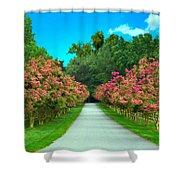 Straight And Narrow Shower Curtain