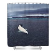 Stranded Beluga Whale Awaiting Incoming Shower Curtain