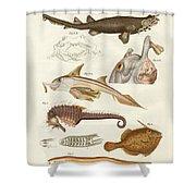 Strange Cartilageous Fish Shower Curtain