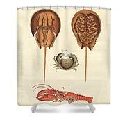 Strange Crabs Shower Curtain