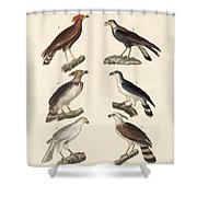 Strange Eagles Shower Curtain