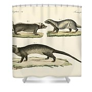 Strange Skunks Shower Curtain