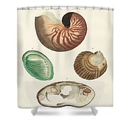 Strange Snails And Clams Shower Curtain