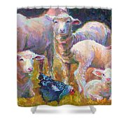 Stranger At The Well - Spring Lambs Sheep And Hen Shower Curtain