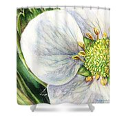 Strawberry Blossom Shower Curtain