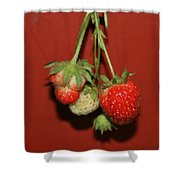 Strawberry Delicious Shower Curtain