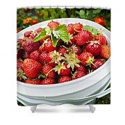 Strawberry Harvest Shower Curtain