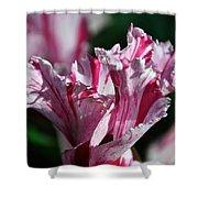 Strawberry Swirled Shower Curtain