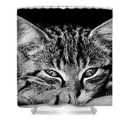 Stray Kitten Shower Curtain
