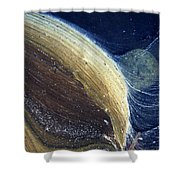 Stream Astronomy 1 Shower Curtain