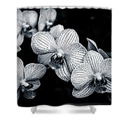 Stream Of Orchids Shower Curtain