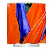 Strelitzia Colour Shower Curtain