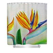 Strelitzia - Together Shower Curtain