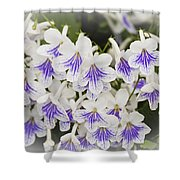 Streptocarpus Shower Curtain