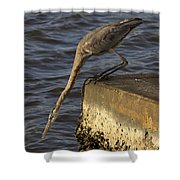 Stretch - Great Blue Heron Shower Curtain