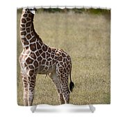 Stretch Shower Curtain by Lori Tambakis