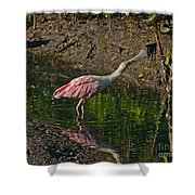 Stretched Out Pink Spoonbill Shower Curtain