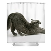 Stretching Cat Shower Curtain
