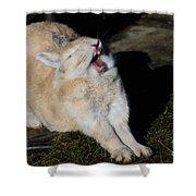 Stretching Rabbit Shower Curtain