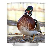 Like This Wood Duck Shower Curtain