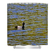 Striking Scaup Shower Curtain