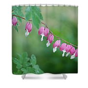 String Of Hearts Shower Curtain