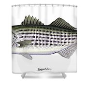 Striped Bass Shower Curtain by Charles Harden