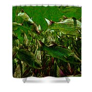 Striped Bass - Painterly V2 Shower Curtain