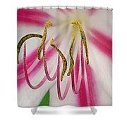 Striped Crinium Shower Curtain