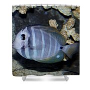 Striped Fish Shower Curtain