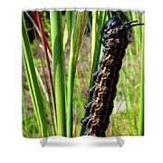 Striped Oak Worm Shower Curtain