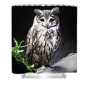 Striped Owl Shower Curtain