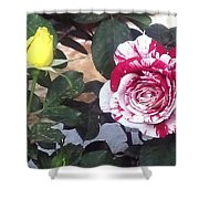 Striped Rose And Yellow Shower Curtain