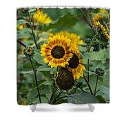 Striped Sunflower Shower Curtain