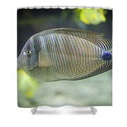 Striped Tropical Fish Desjardini Tang Shower Curtain