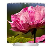Stripes On  Roses Shower Curtain