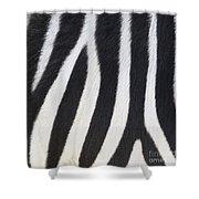 Stripes On Zebra Shower Curtain