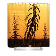 Strive Shower Curtain