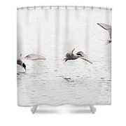 Stroboscopic Study Of Flying Arctic Tern Over Lake Shower Curtain