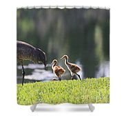Stroll By The Pond Shower Curtain