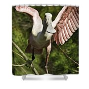 Strutting - 3d Shower Curtain