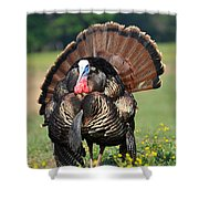 Strutting Gobbler Shower Curtain