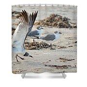 Strutting Seagull On The Beach Shower Curtain