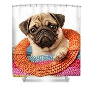 Stuck Pug Shower Curtain by Greg Cuddiford