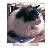 Studio Cat Shower Curtain