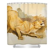 Study For Daniel In The Lions Den Shower Curtain