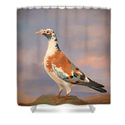 Study Of A Carrier Pigeon Shower Curtain
