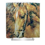 Study Of A Horse's Head Shower Curtain